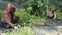 Perusahaan batubara PT Tunas Inti Abadi (TIA) memperbaiki lahan kritis di daerah aliran sungai tahura Sultan Adam, kawasan waduk Riam Kanan, desa Tiwingan Lama, Banjar Kalimantan Selatan. (Wicak/Liputan6.com)