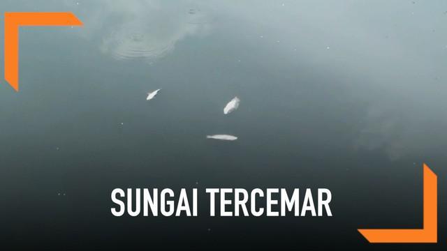 Ribuan ikan mati di kali Ancol. Kejadian ini mengkagetkan petugas sumber daya air pemprov DKI Jakarta. Selain itu kali Ancol yang biasanya bening berubah warna menjadi hitam pekat