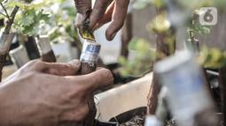 Yatno menyelesaikan proses penyemaian bibit anggur dengan cara okulasi di Kebun Imut Si Nakal, Kelurahan Malaka Sari, Kecamatan Duren Sawit, Jakarta, Minggu (7/3/2021). Kebun budi daya bibit anggur dinamai Kebun Imut Sinakal (Sigap Niat dan Berakal). (merdeka.com/Iqbal S. Nugroho)