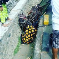 kuda jatuh ke selokan (foto: @infocegatan_jogja)