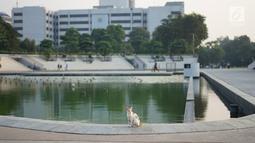 Seekor kucing terlihat di Taman Lapangan Banteng, Jakarta, Kamis (20/6/2019). Taman dengan luas 5,2 hektar tersebut menjadi salah satu lokasi favorit warga untuk berolahraga dan juga melepas penat. (Liputan6.com/Immanuel Antonius)