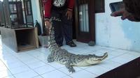 Satwa liar hasil evakuasi BKSDA Jabar hasil temuan warga di Pantura Jawa Barat. Foto (Liputan6.com / Panji Prayitno)