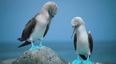 Hewan-hewan Berwarna Biru Paling Menakjubkan di Dunia