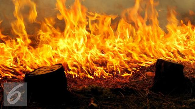 Ilustrasi Kebakaran Hutan (iStockphoto)
