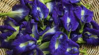 ilustrasi bunga telang merupakan tanaman herbal/pexels