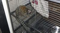 Pria tersebut ditangkap polisi karena membiarkan hewan peliharaannya mabuk asap ganja.