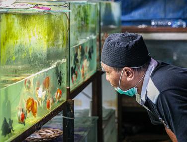 Ikan Hias Diburu Warga Selama Masa Pandemi