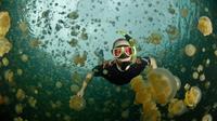 Pulau Eil Mak, Palau hadirkan sensasi berenang dengan kawanan ubur-ubur yang bersahabat.