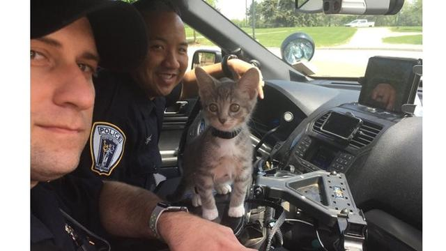 7 Potret Kucing Jadi Pekerja Ini Bikin Gemas