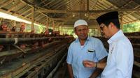 Cagub Sulsel, Ichsan Yasin Limpo Kunjungi Peternak Ayam Petelur di Kabupaten Sidrap, Sulsel (Liputan6.com/ Eka Hakim)