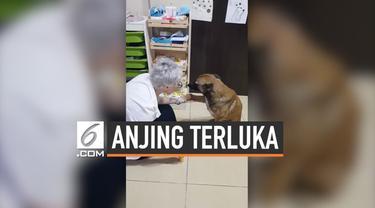 Seorang apoteker didatangi oleh seekor anjing yang terluka. Hewan tersebut meminta untuk diobati. Setelahnya, sang anjing seakan mengucapkan terima kasih.