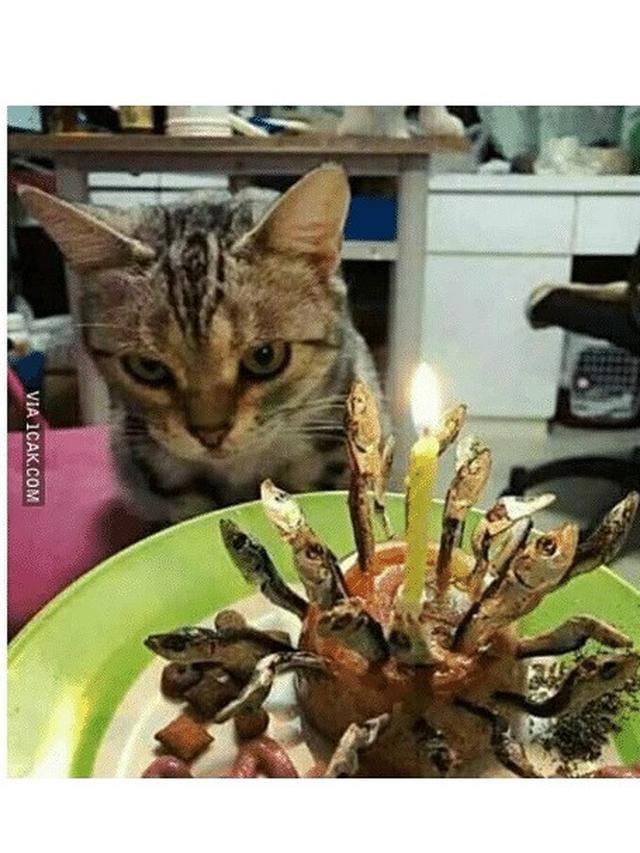 6 Potret Perayaan Ulang Tahun Kucing Ini Bikin Tepuk Jidat
