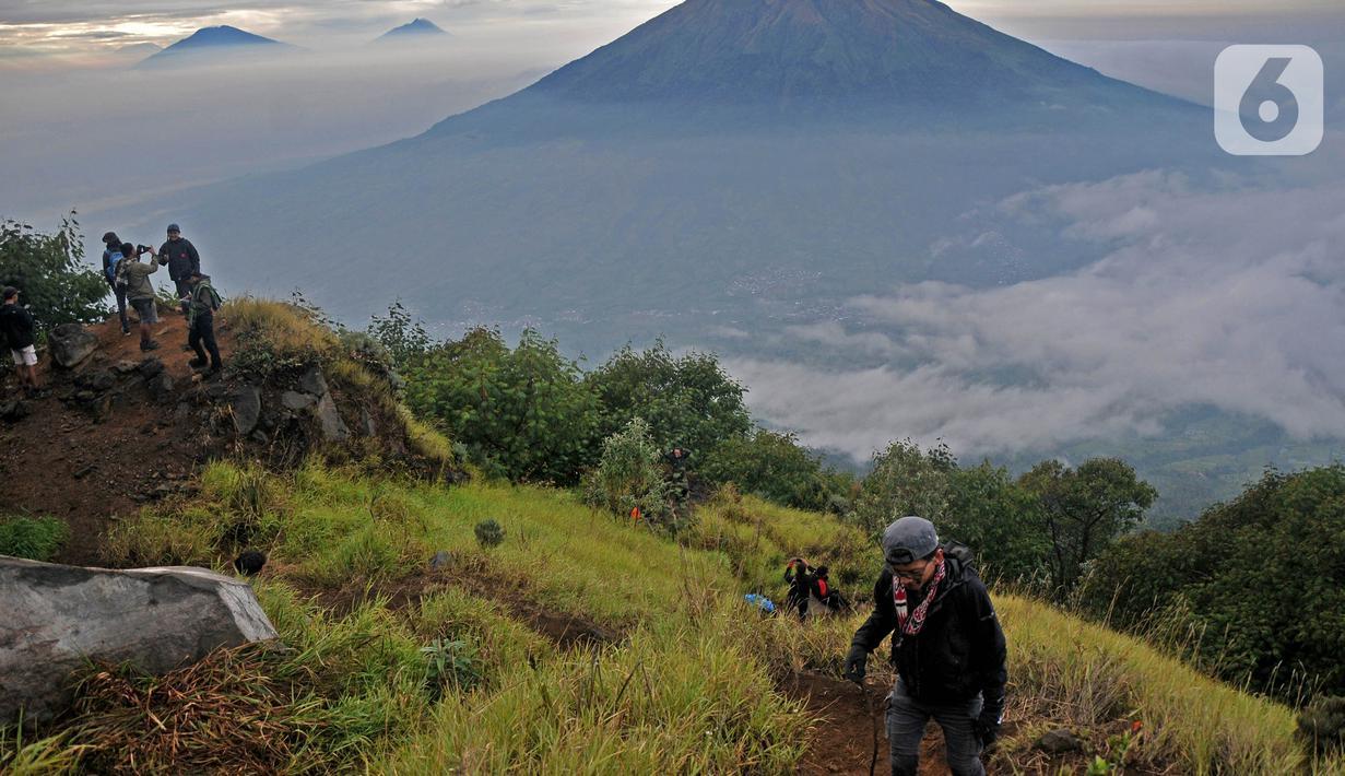 Wisatawan saat melakukan pendakian Gunung Sindoro via Jalur Alang-Alang Sewu, Kertek, Wonosobo, Jawa Tengah, Sabtu (11/9/2021).Wisata pendakian Gunung Sindoro kembali dibuka pasca meredanya kasus Covid-19 di Jawa-Bali yang memasuki PPKM Level 3. (merdeka.com/Iqbal S Nugroho)