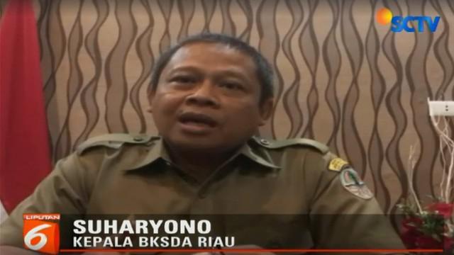 Tim BKSDA Riau harus menunggu pemulihan kesehatan Bonita yang diperkirakan membutuhkan waktu cukup lama.