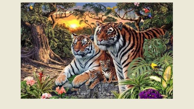 Unduh 620 Koleksi Gambar Harimau Ngantuk Paling Bagus