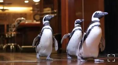 Penguin-Penguin Lucu Duta Kampanye Kurangi Sampah Plastik