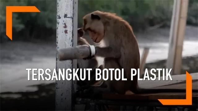 Momen menyedihkan dimana tangan monyet tersangkut botol plastik selama sebulan. Kini hewan tersebut telah mendapatkan perawatan.