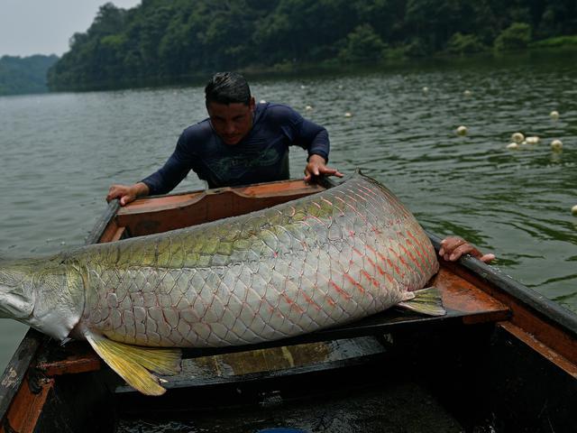 Inilah 6 Ikan Paling Mengerikan Di Dunia Salah Satunya Ada Di Indonesia Global Liputan6 Com
