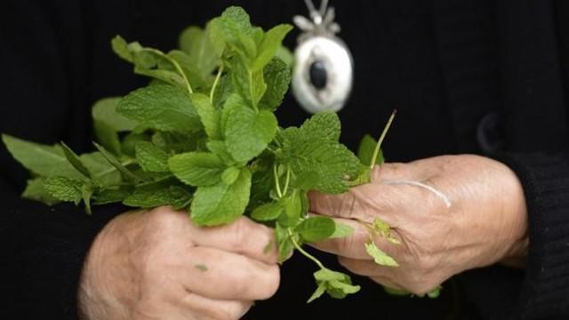 Dibalik aroma dan nikmatnya teh daun mint dan rosemary, ini segudang manfaat baik untuk kesehatan kamu.