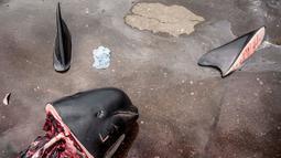 Bagian tubuh paus pilot tergeletak di dermaga di Jatnavegur, dekat Vagar, Kepulauan Faroe, Denmark, Rabu (22/8). Hasil buruan dibagi menurut sistem tradisional yang rumit antara pemburu dengan penduduk setempat. (MADS CLAUS RASMUSSEN/RITZAU SCANPIX/AFP)