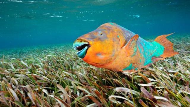 Download 570 Koleksi Gambar Ikan Laga Cantik HD Terbaru