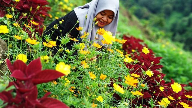 Pagi Hari Bunga Mekar Warna Warni Di Bukit Pelangi