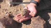 Hewan mungil 'berbelalai' itu ditemukan di sekitar gurun Afrika.