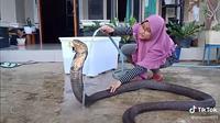 Mandikan ular kobra di depan rumah (Sumber: TikTok/ahlemottt01)