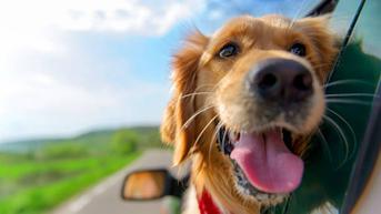 Dubai Gunakan 38 Anjing Pelacak Covid-19 di Bandara dengan Tingkat Keberhasilan 98,2 Persen