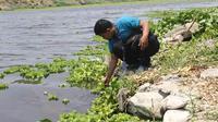 Sungai Bengawan Solo tercemar limbah tekstil, ada dari alkohol ciu, batik, dan limbah ternak babi. (Liputan6.com/Ahmad Adirin)
