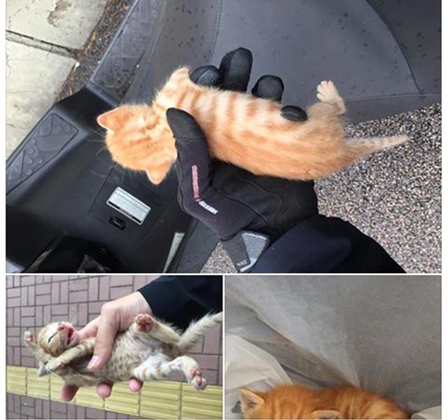 Anak kucing yang diselamatkan Kevin | Photo: Copyright shanghaiist.com
