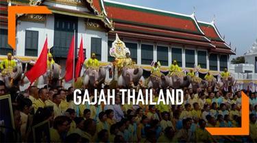 Belasan gajah dan ratusan warga berbaju kuning memberikan penghormantan kepada Raja Thailand yang baru, Raja Rama X.