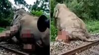 Sebuah video beredar yang menampilkan gajah penuh luka tertabrak kereta dan terseret sepanjang 30 meter. (Sumber: World of Buzz)