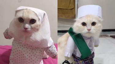 Unggahan video viral dari tingkah seekor kucing memakai pakaian salat.