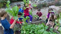 Tepatnya hari ini Jumat (5/6/2015) masyarakat di penjuru dunia turut merayakan Hari Lingkungan Hidup dengan beragam cara.