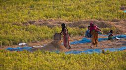 Perempuan India bekerja di sawah di sawah di pinggiran Gauhati, India, Senin (27/5/2019). Lebih dari 70 persen penduduk India yang berjumlah 1,25 miliar terlibat dalam pertanian. (AP Photo/Anupam Nath)