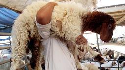 Pedagang membawa seekor domba sembari menunggu pembeli hewan kurban di sebuah pasar ternak di Kuwait pada 5 Agustus 2019. Umat Islam di seluruh dunia akan merayakan Idul Adha yang identik dengan tradisi berkurban dengan hewan seperti kambing, domba, unta, sapi dan kerbau. (Yasser Al-Zayyat/AFP)