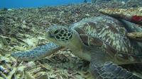 Turtle Heaven merupakan spot menyelam di utara Gili Meno yang menyimpan keindahan bawah laut yang menakjubkan. Foto: Andi Jatmiko/ Liputan6.com