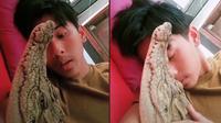 Viral Pria Pelihara Buaya dan Diperlakukan Bak Anak Sendiri. (Sumber: TikTok/ @davinhensi)