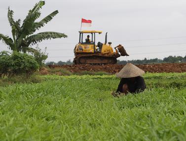 FOTO: Hamparan Sawah yang Tersisa di Jakarta