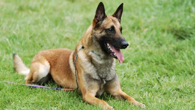 Anjing yang Serang ART di Cipayung Akan Diserahkan ke Unit K