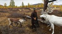 Suku Dukha: Penggembala Rusa Kutub yang Tersisa di Muka Bumi (AFP)