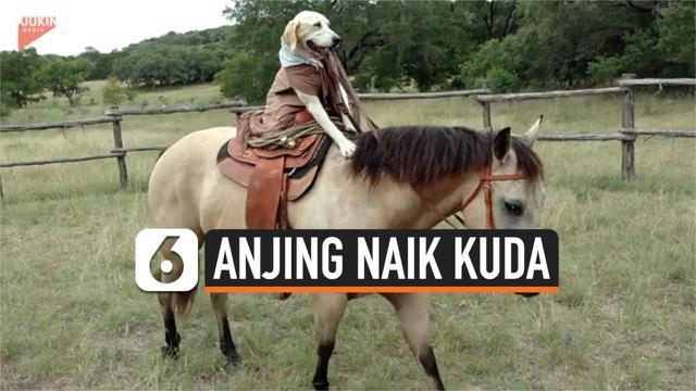 thumbnail anjing naik kuda