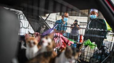 Penampakan Mobil Penuh dengan Kucing