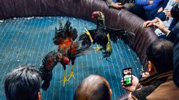 Penonton merekam sabung ayam di Kota Najaf, Irak, Sabtu (26/1). Ayam jenis Harati asal Turki menjadi primadona untuk diadu karena memiliki kaki dan leher berotot. (Haidar HAMDANI/AFP)