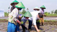 Menteri Koordinator Bidang Perekonomian Airlangga Hartarto mengunjungi lahan pertanian di Klaten, Jawa Tengah untuk melihat penerapan konsep farming yang diterapkan, Jumat (24/09/2021) (Foto: Kementerian Ekonomi)