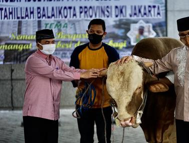 FOTO: Melihat Sapi Limosin Sumbangan Anies Baswedan