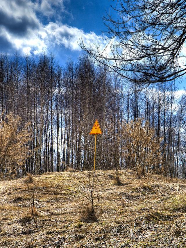 Hutan Merah di Chernobyl
