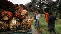 Kelapa sawit (AFP PHOTO/CHAIDEER MAHYUDDIN)