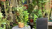Deretan tanaman Devi Natalia, penggiat tanaman yang kerap berbagai cerita dan tips melalui akun Instagram @kebun.devi. (dok. Instagram @kebun.devi/https://www.instagram.com/p/CDDVR0XDgmE/Putu Elmira)